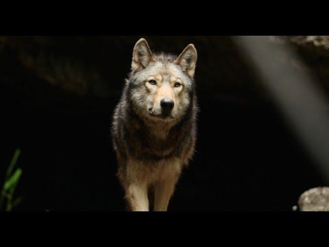 """hqdefault - """"The Promise"""" il corto di Almo Nature"""