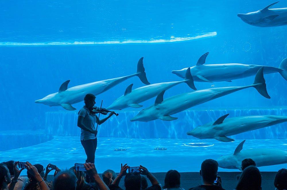 L 39 acquario di genova compie 25 anni life style blog for Blu di metilene acquario