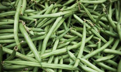 Fagiolini: proprietà benefici e calorie 68 Fagiolini: proprietà benefici e calorie