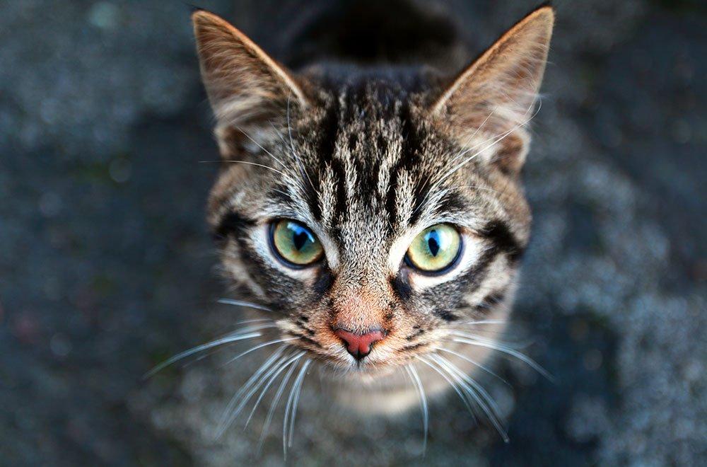 Giornata Internazionale del Gatto: 8 agosto 5 Giornata Internazionale del Gatto: 8 agosto