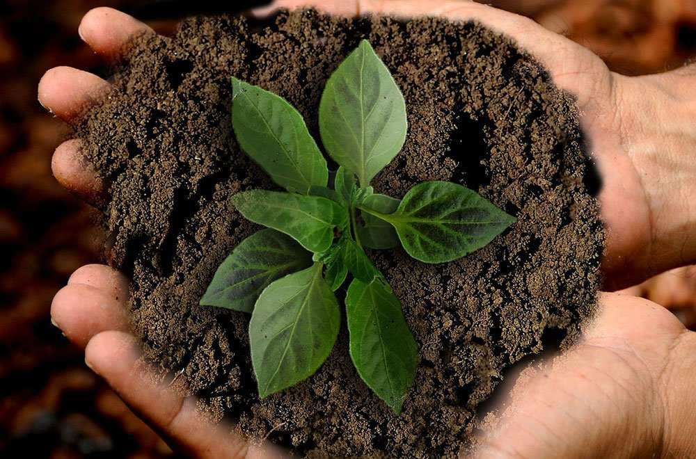 Giornata della terra: 5 gesti per contribuire a salvare il pianeta 6 Giornata della terra: 5 gesti per contribuire a salvare il pianeta