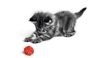 Le 5 regole d'oro per crescere al meglio cuccioli e gattini 14 Le 5 regole d'oro per crescere al meglio cuccioli e gattini
