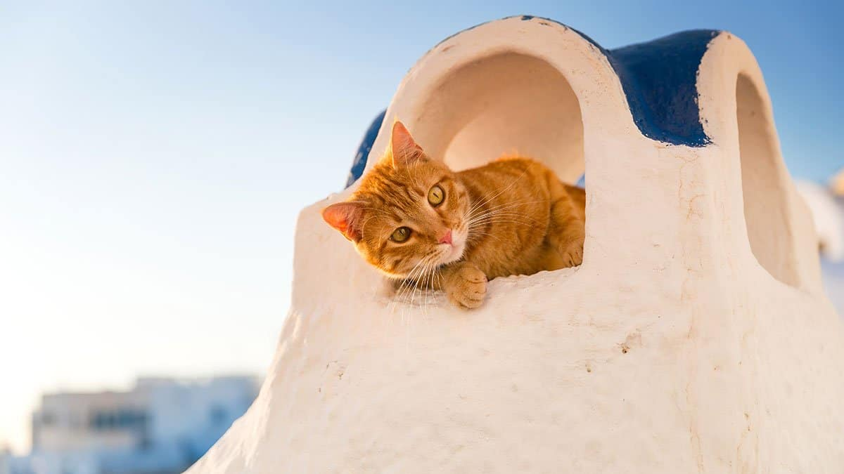 Vacanze con i pet