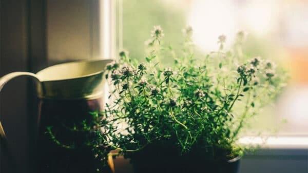 fiori piante decorare casa 600x337 - Quali sono i fiori e le piante più belle per decorare la casa e renderla più chic?